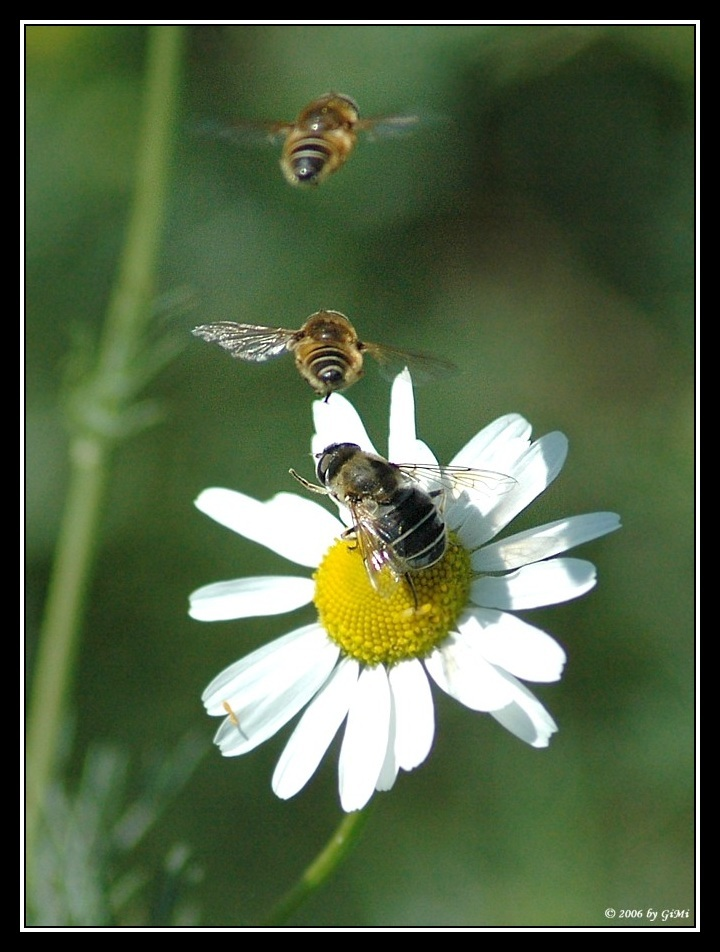 Bee Squadron by GiMi53