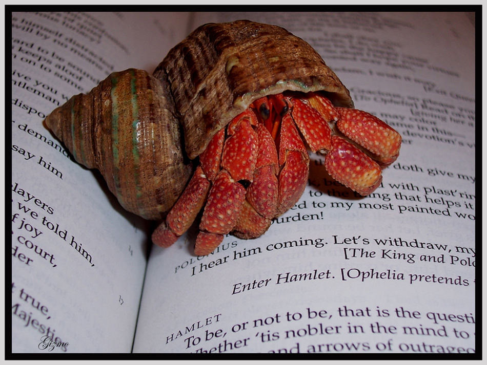 Shakespearian Crab by gizmo563