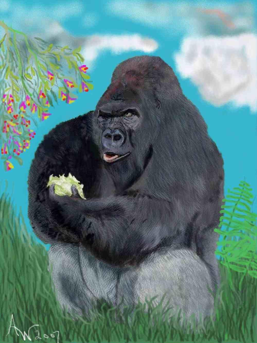 Silver Back Gorilla with lettuce by Ace10
