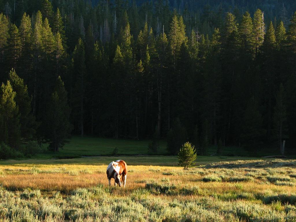Horse Meadow in the Sierras by nelsone