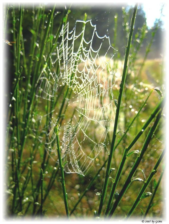 web in morning dew by GiMi53