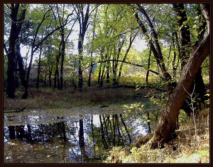 Chicopee River-Shallow Part