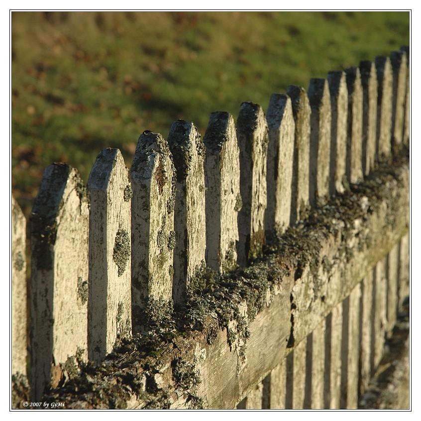 Frothy Fence by GiMi53