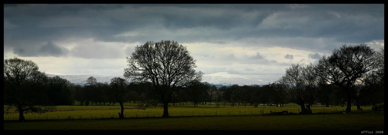 Trees 3 by efflux