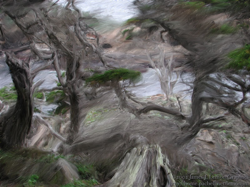 ocean cypress, point lobos CA by lemonjim