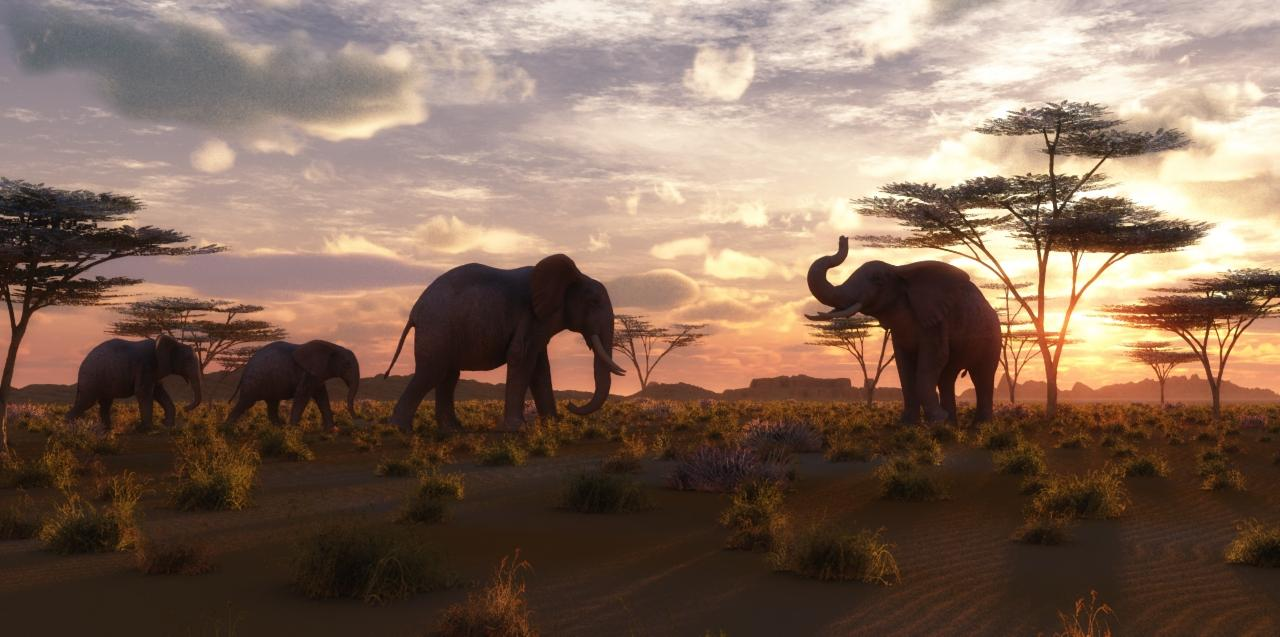 Early evening in the Serengeti