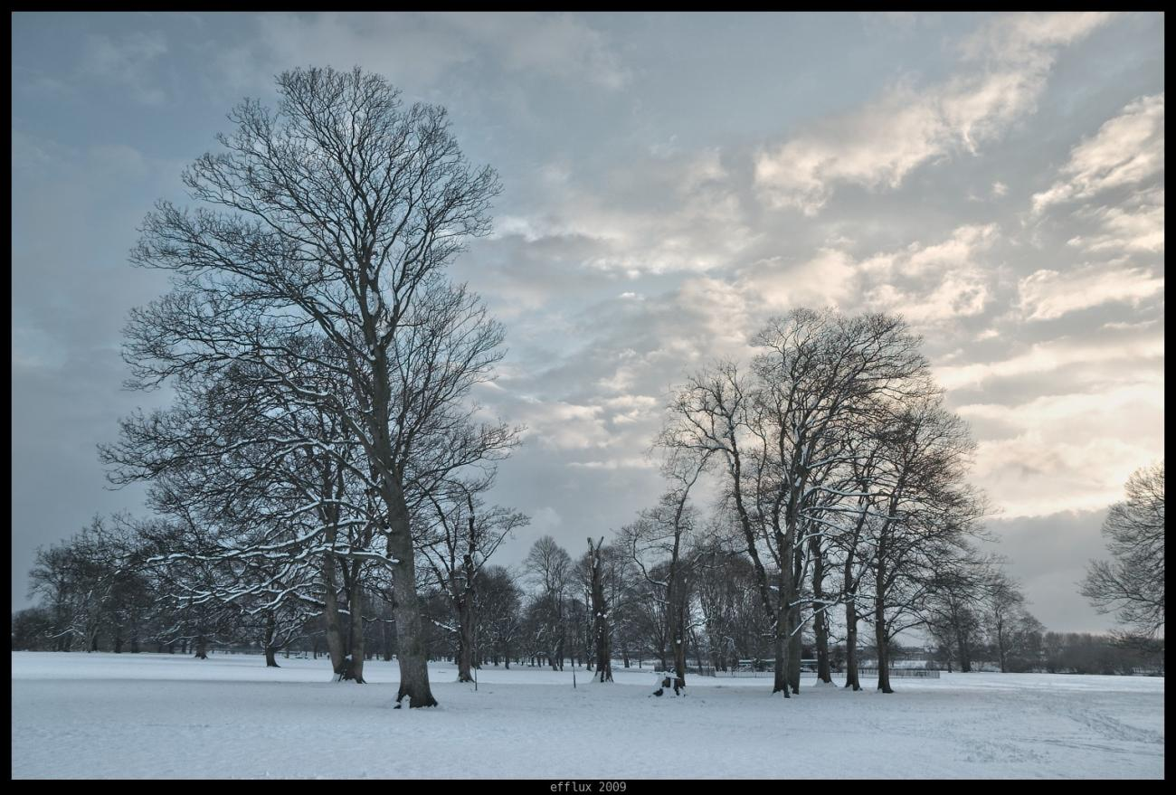 Trees 5 by efflux
