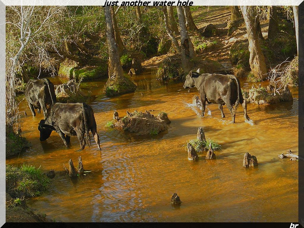 JUST ANOTHER WATERING HOLE by brathburn