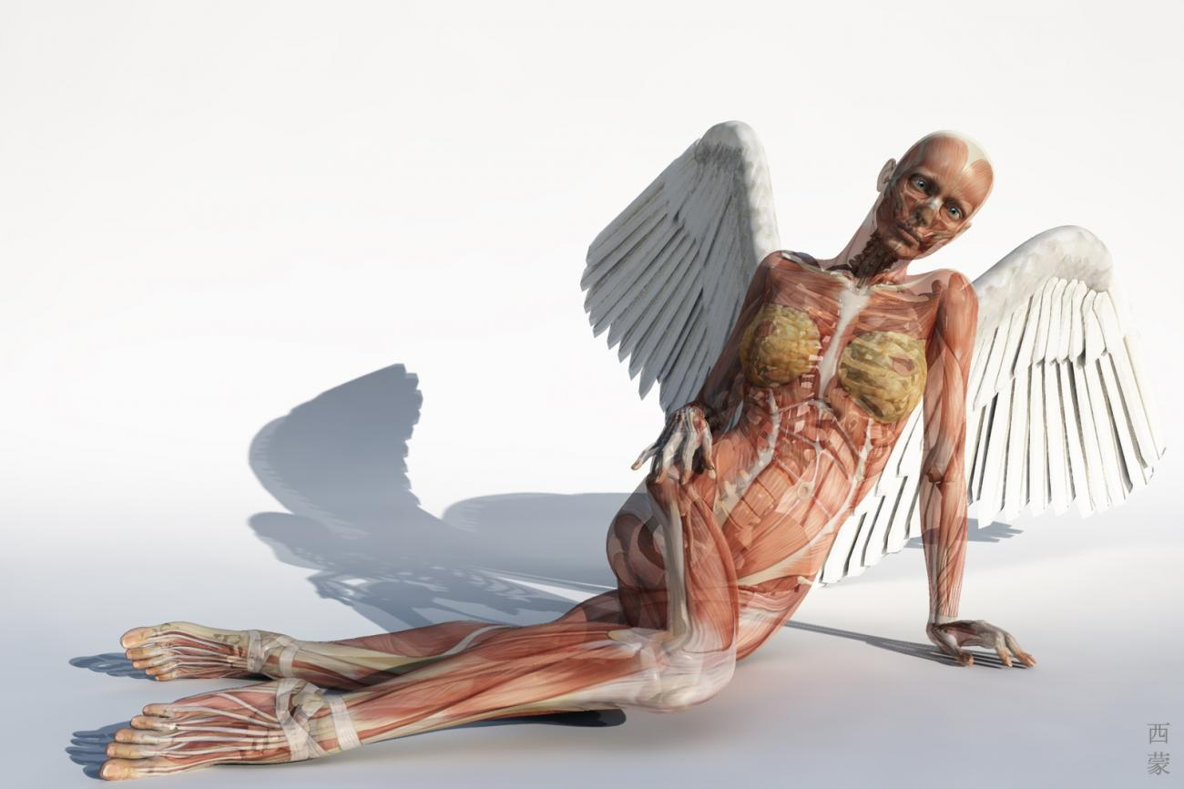 Anatomical Angel by Digger2000