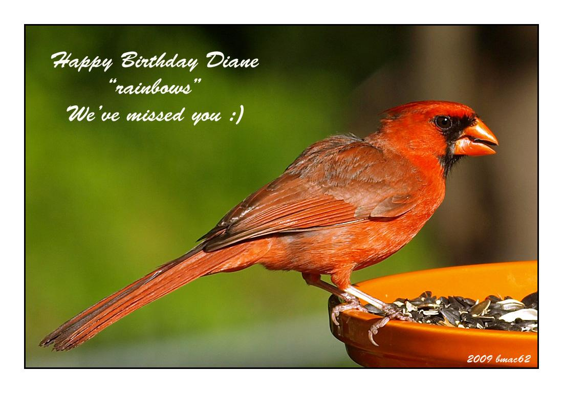 For Diane Rainbows Happy Birthday By Bmac62 Photography Animals