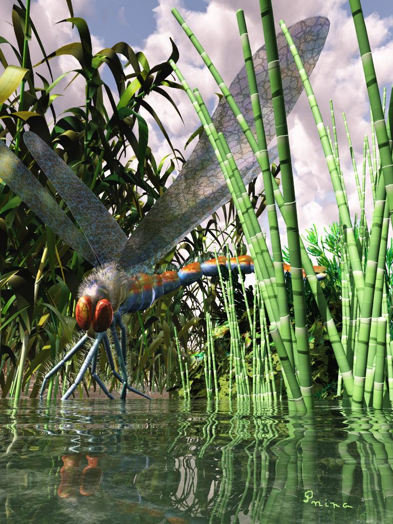 Touched by a Rainbow: Dragon Fly's Delight