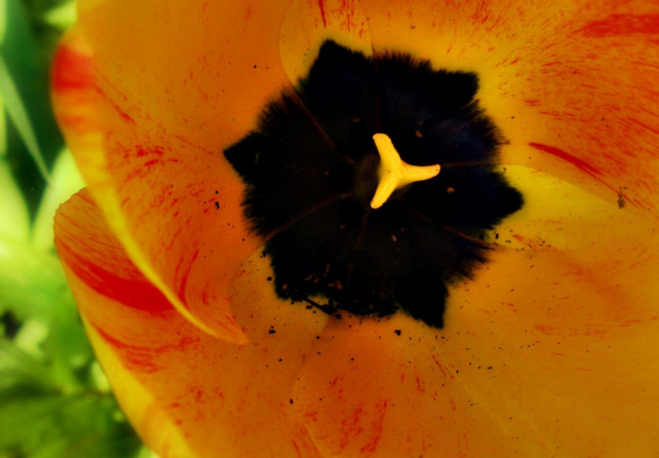Inside the Tulip by madame