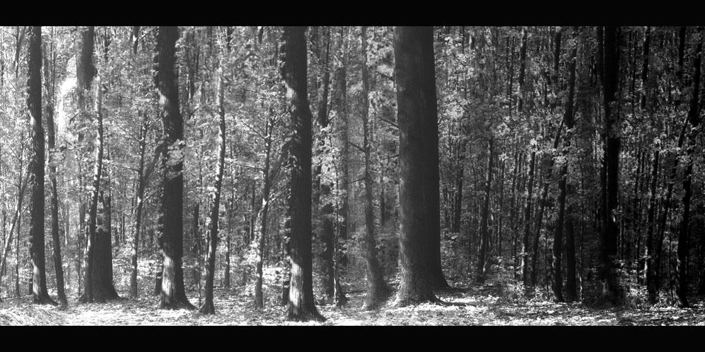 the forest 4 by fabriced