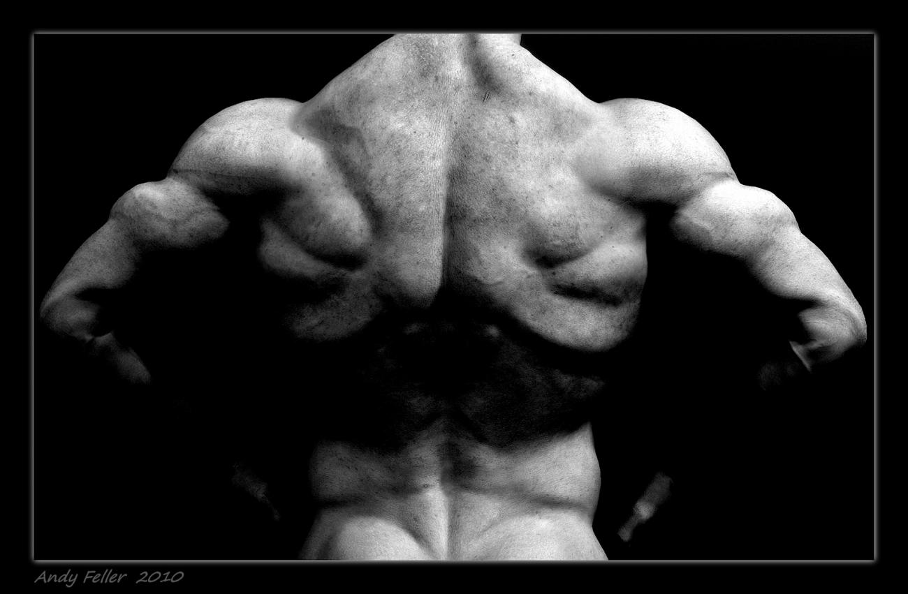 Muscular. by andypf