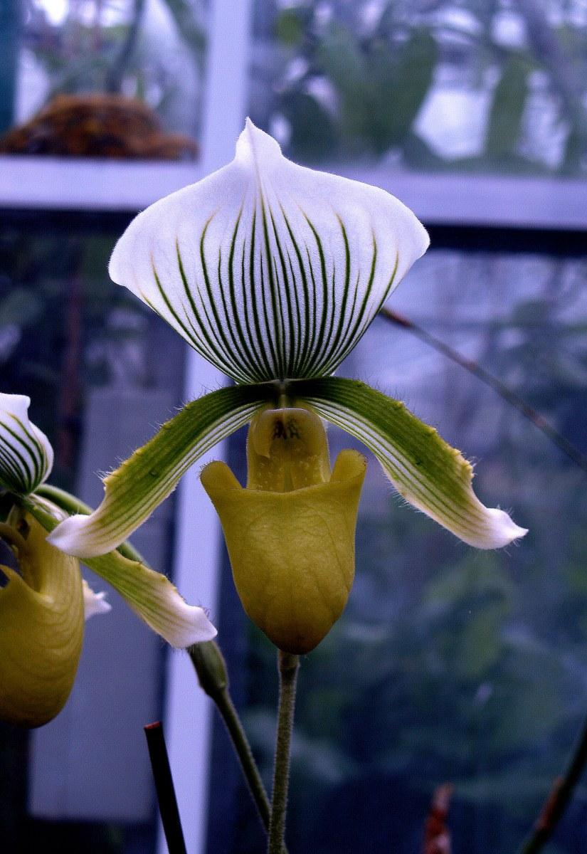 Tropical orchid 2.