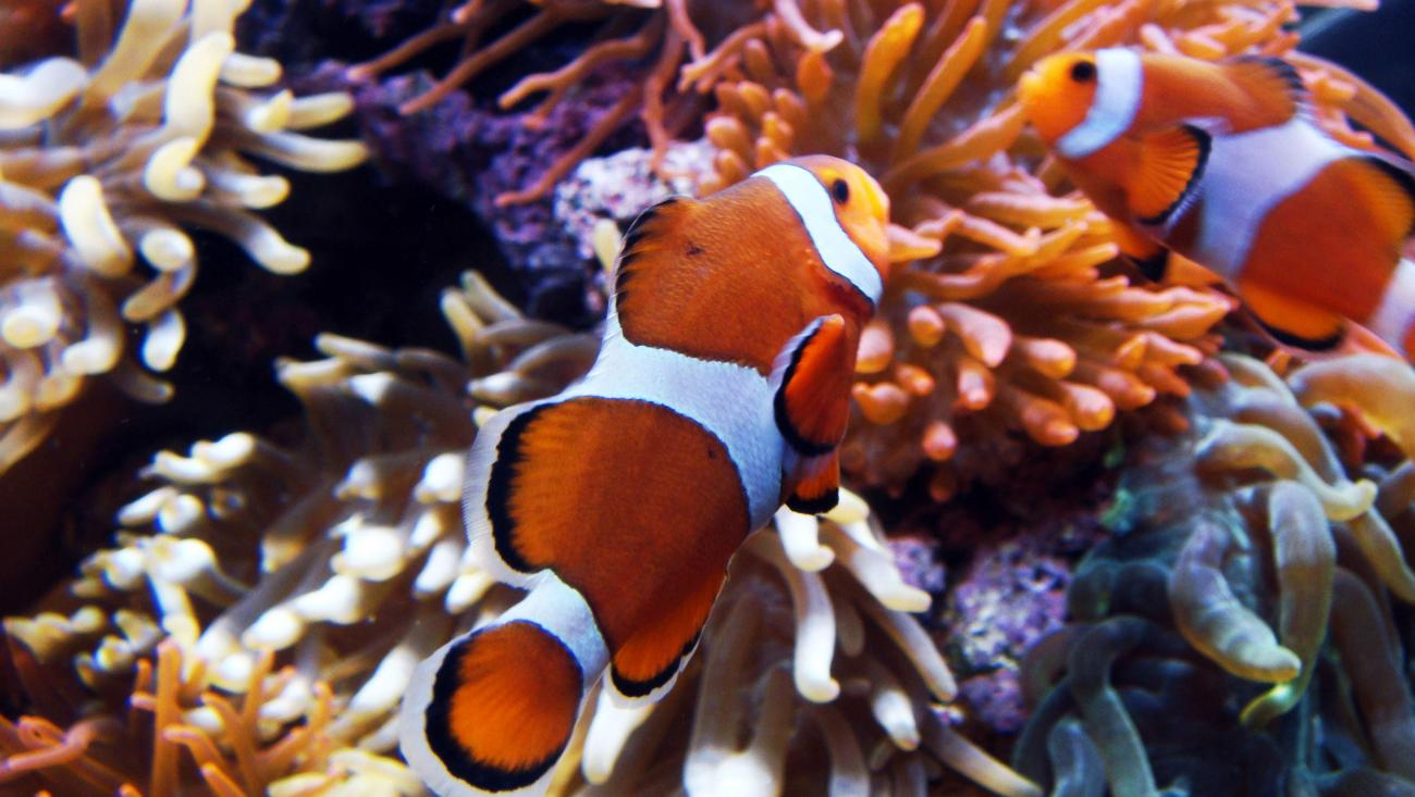 Found Nemo by bcbc