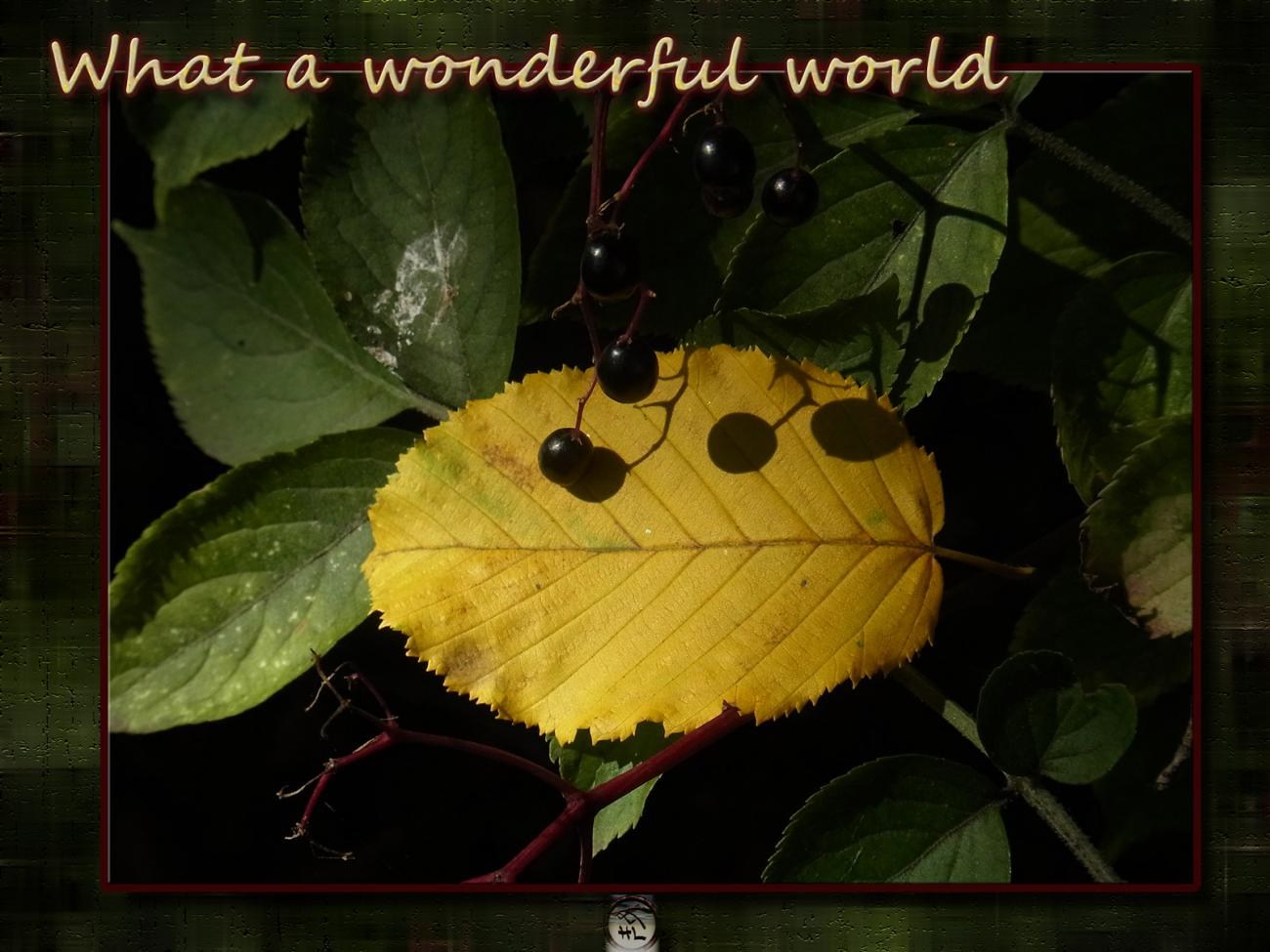 what a wonderful world - part 15