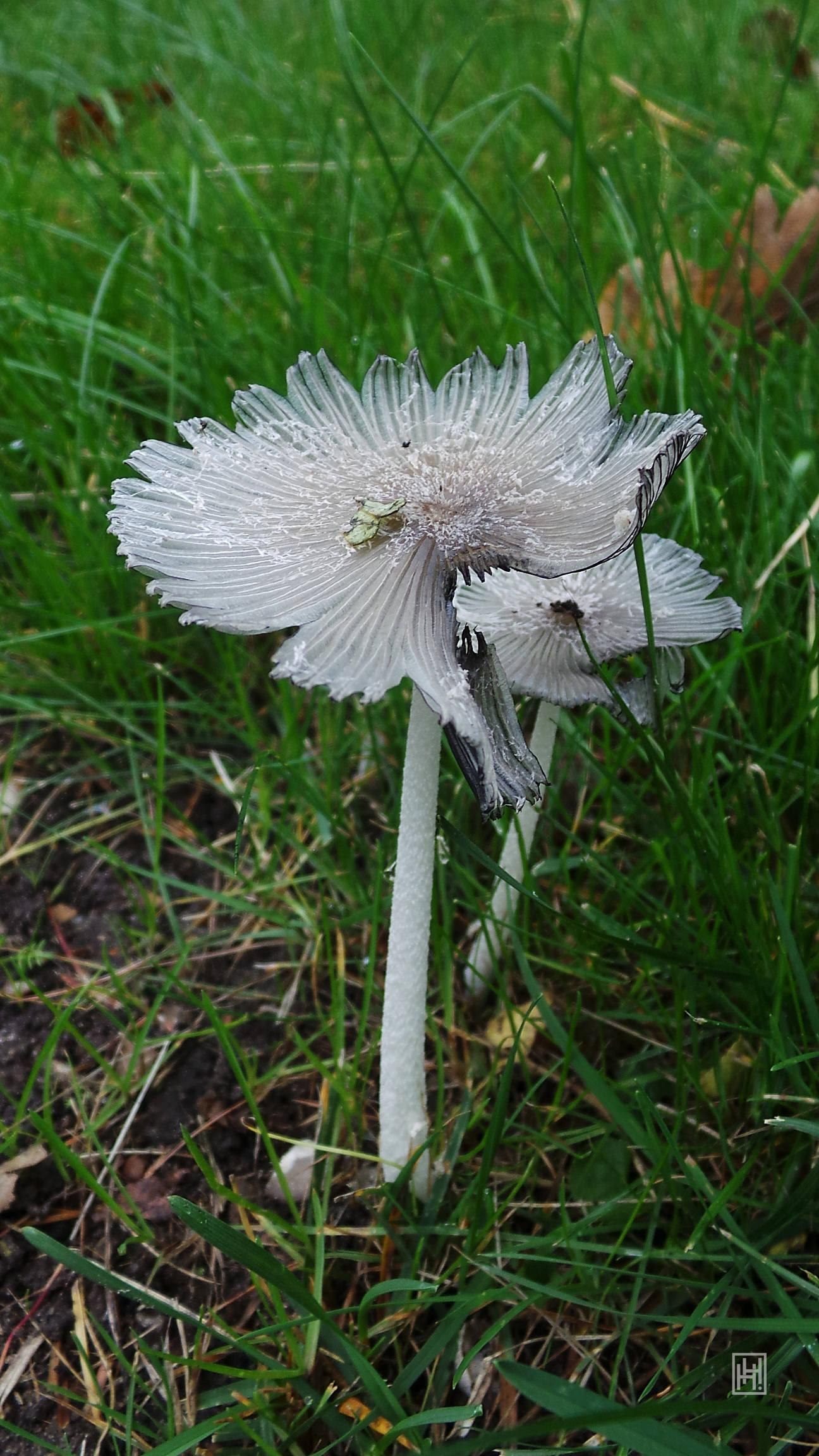 Fungus Time 4 by helanker