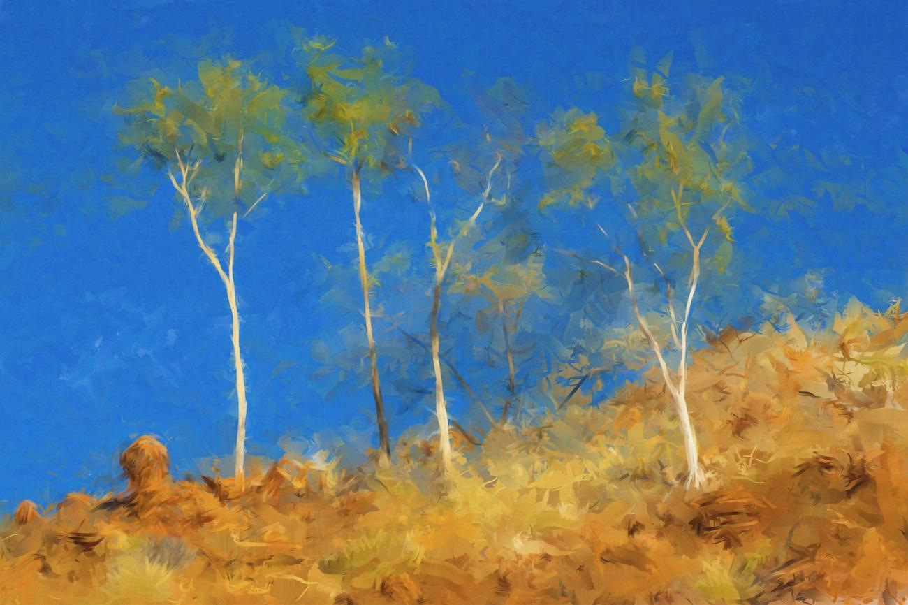 Young Eucalypt Trees by MalenySteve