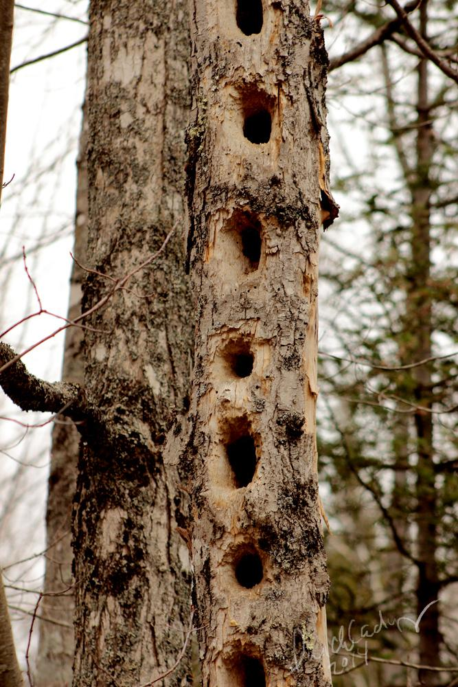 Nature's Bird House by lunchlady