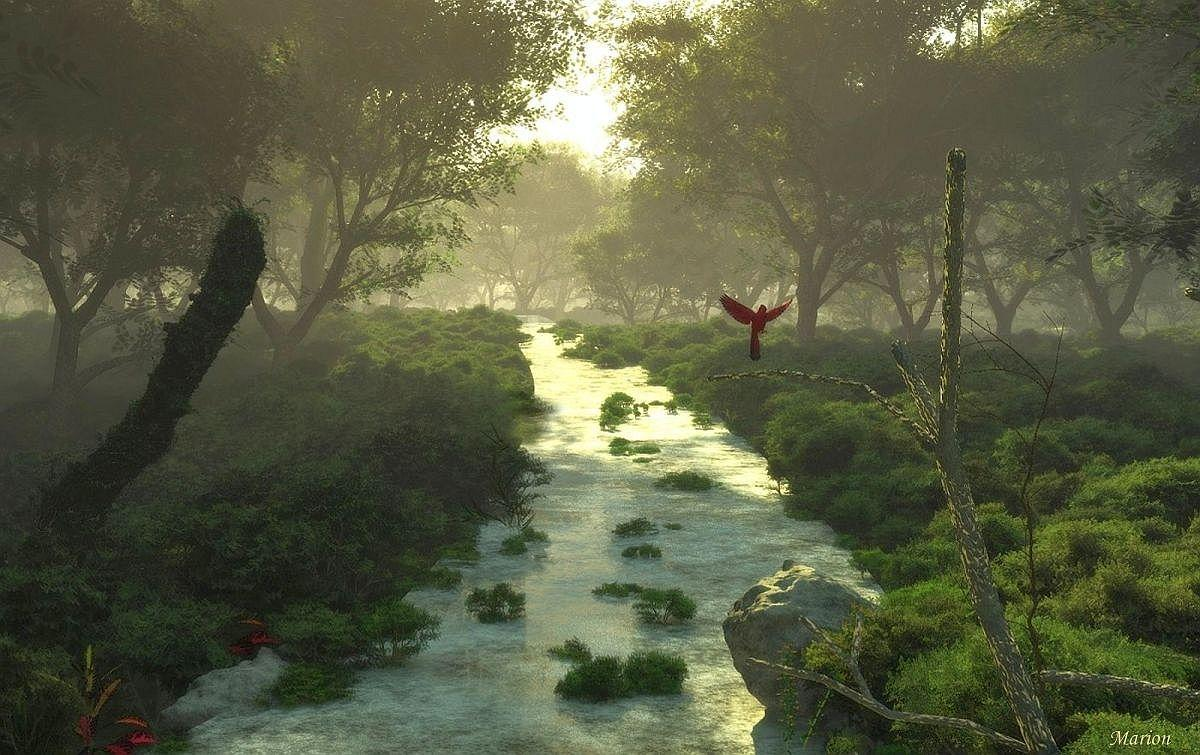 Forest stream in the morning light  by Minaya