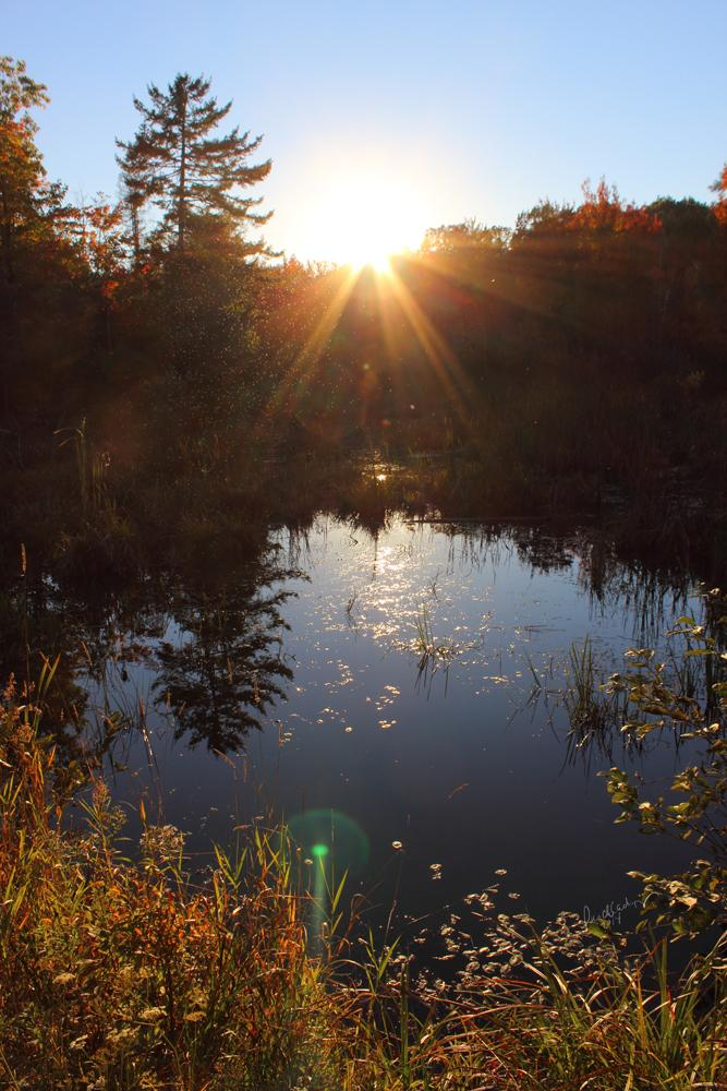 Fall At The Turtle Bog *for debbielove* by lunchlady