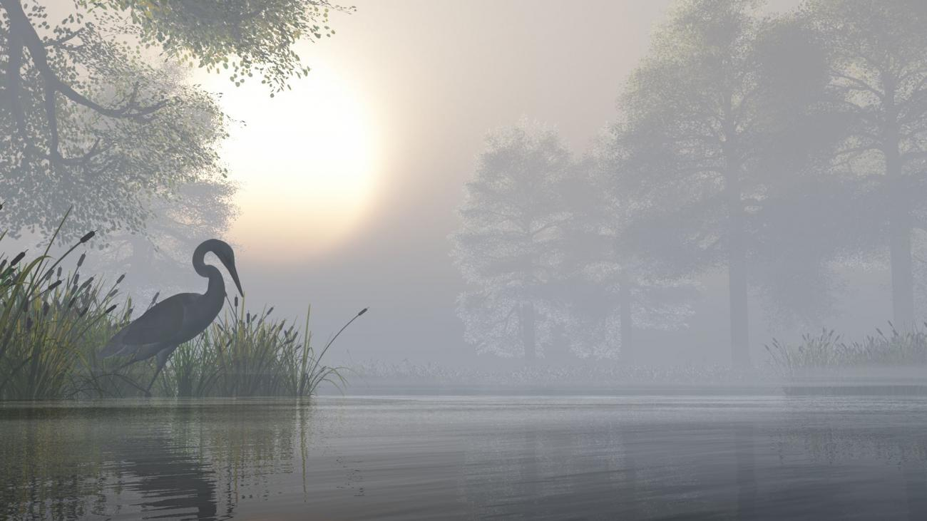 Heron by lonely_wolf