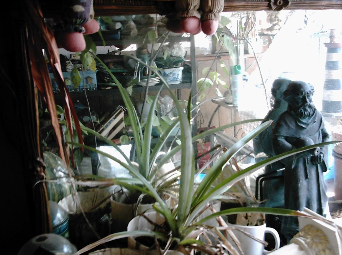 The Plant Room by calico_jester