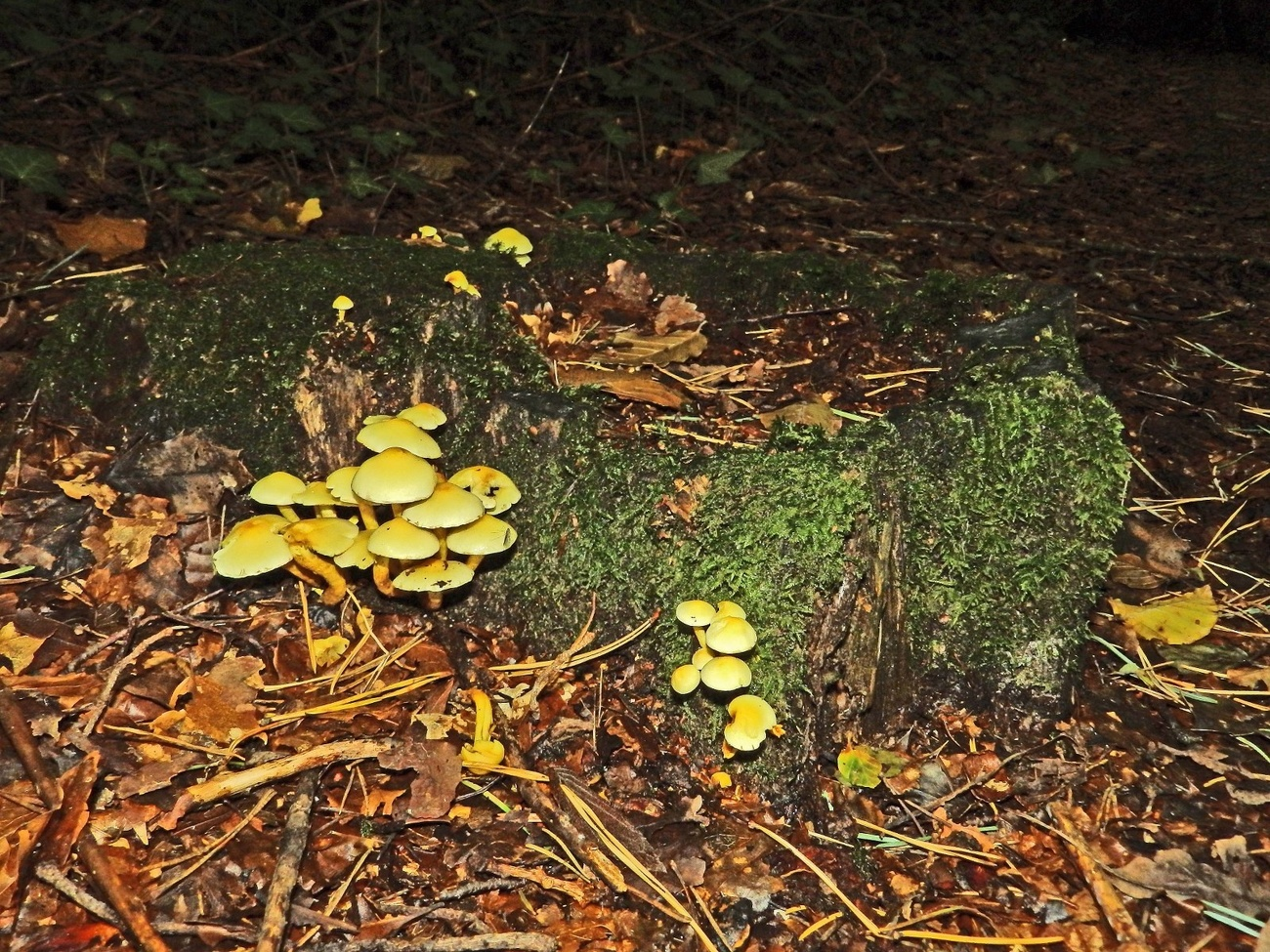 Fungi in the woods.