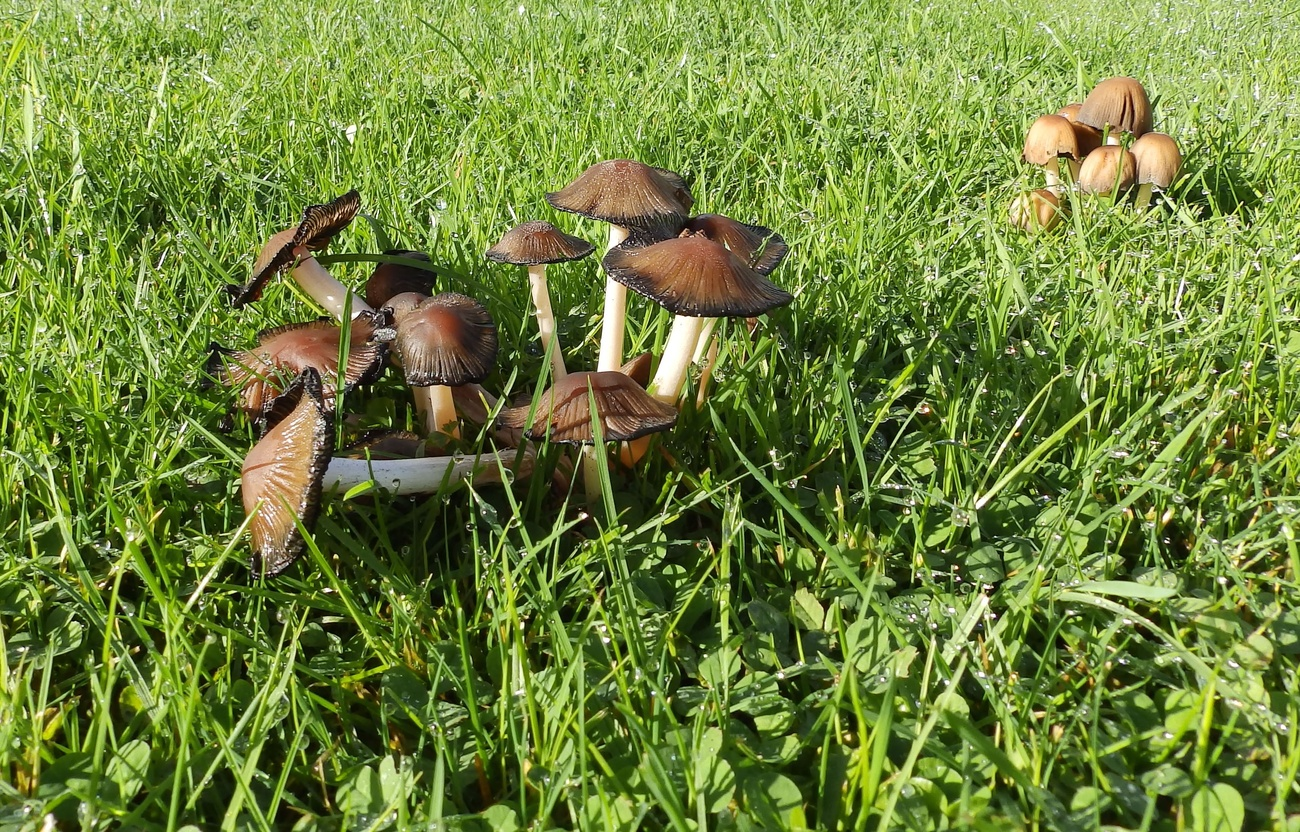 Stools in the damp grass.
