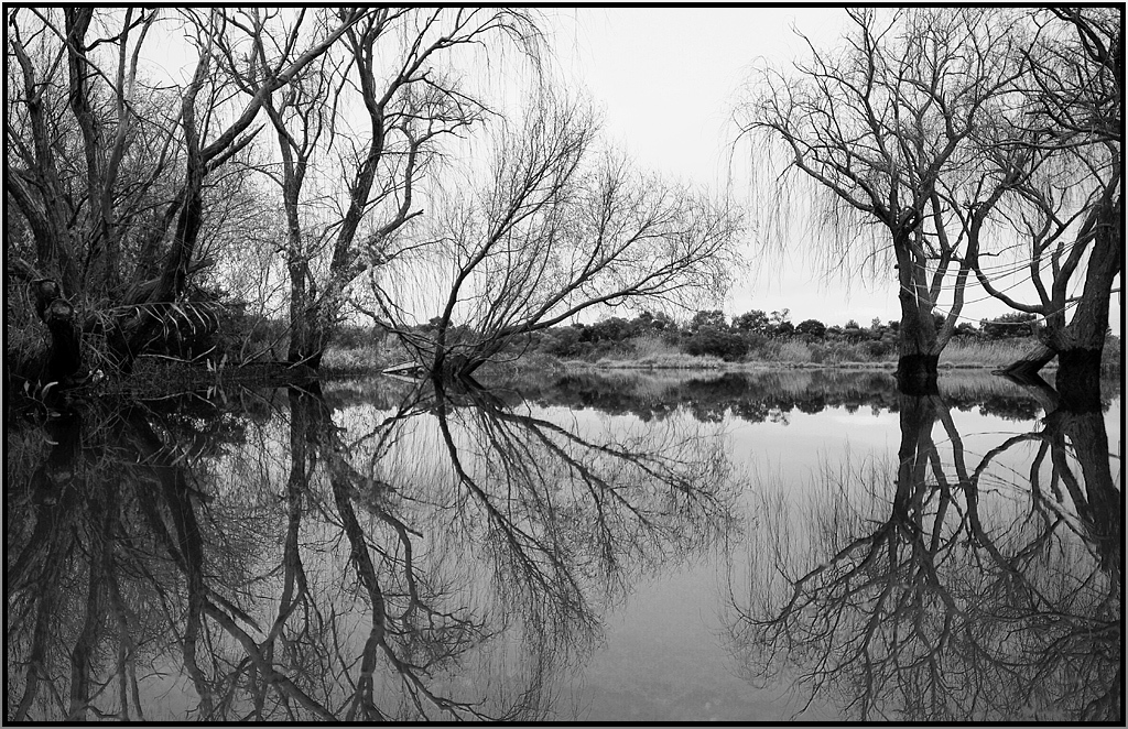 Trees  and reflections by cfulton