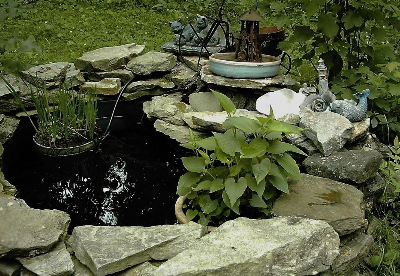 *** ... time to clean a yard pond *** by calico_jester