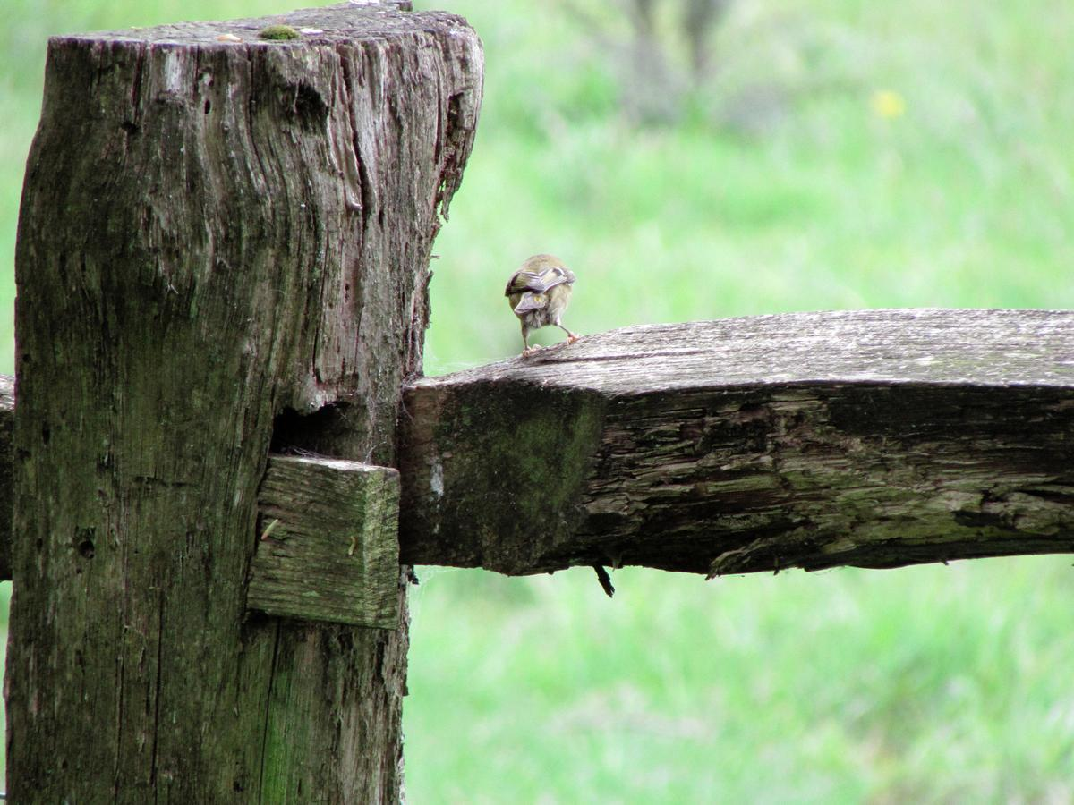 Bird on a fence by Star4mation