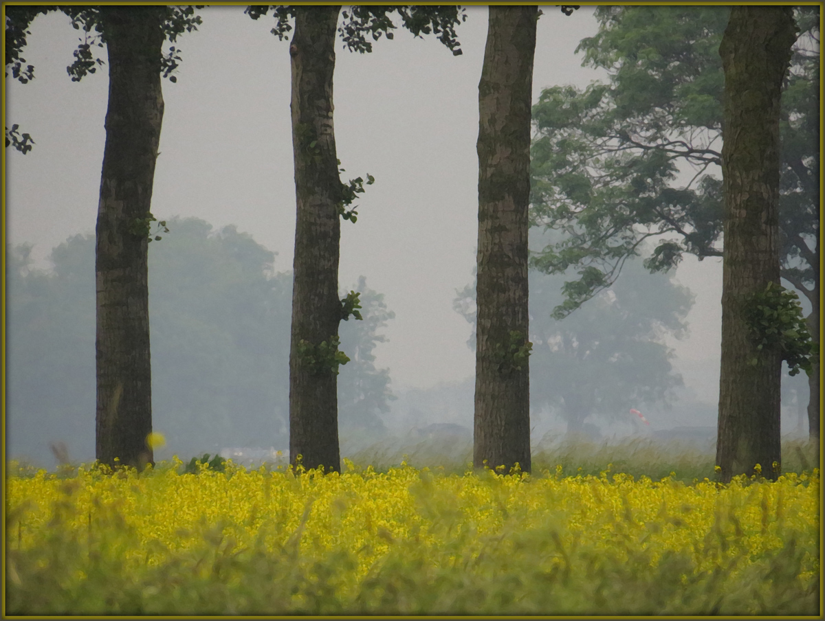 Trees and rapeseed by iaacf