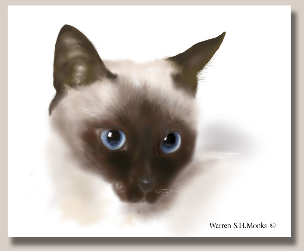 Chocolate Siamese Kitten by ratfugel