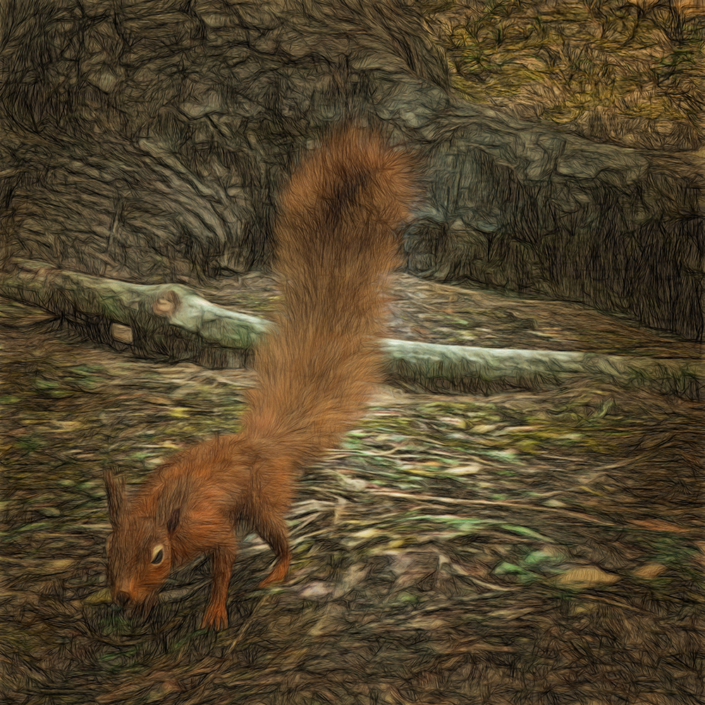 Red squirrel by martial