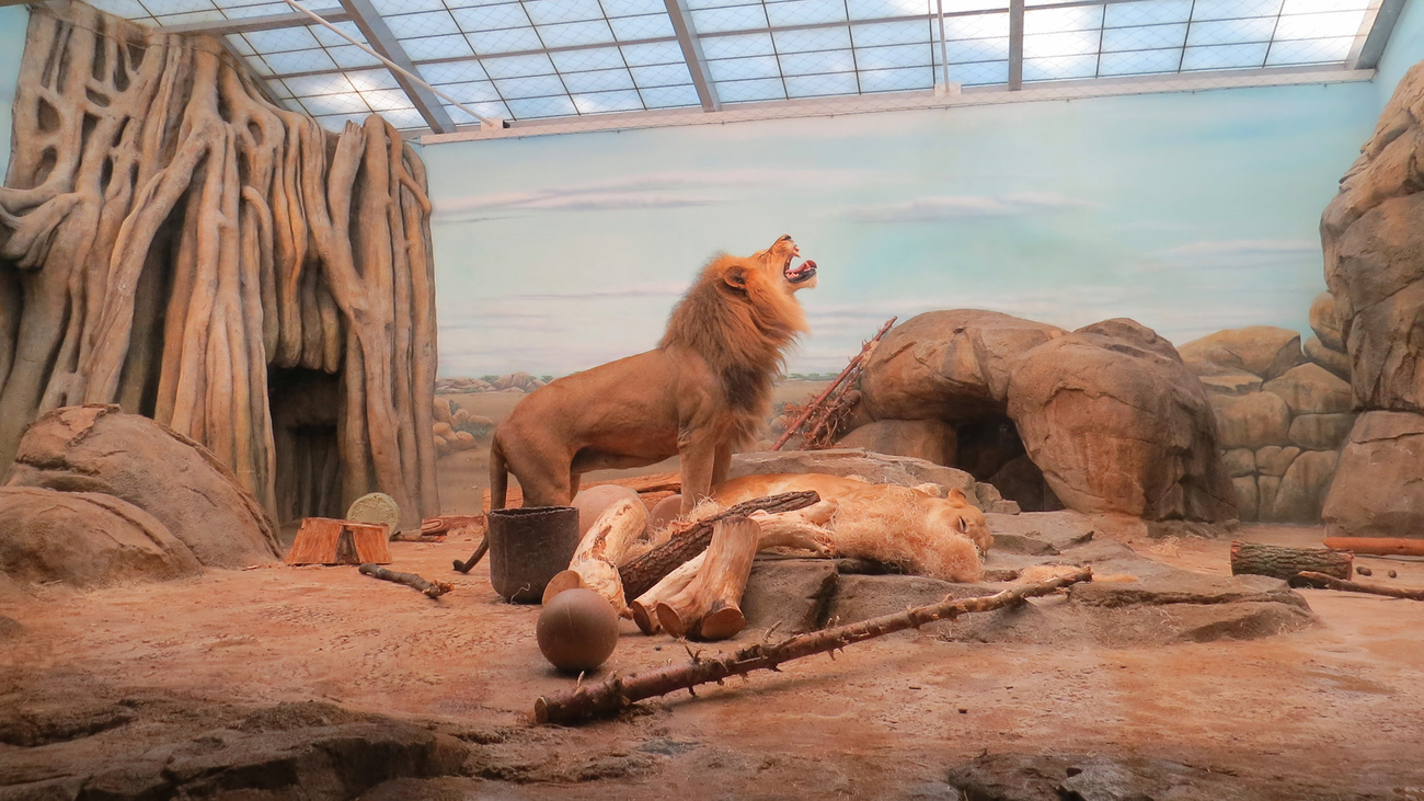 King of the Milwaukee County Zoo by AirRaid