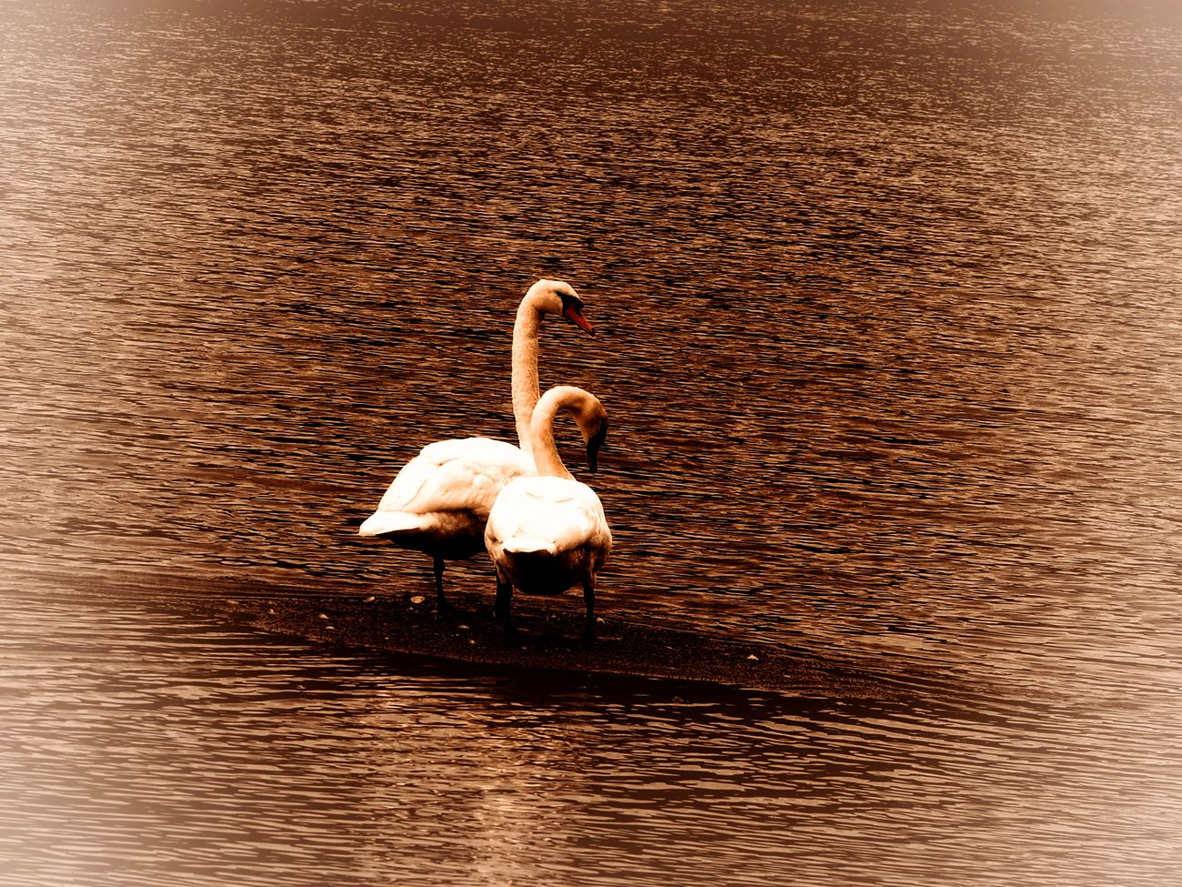 swanning by awjay