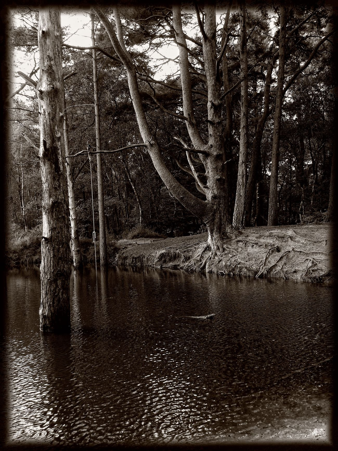 wet roots by awjay