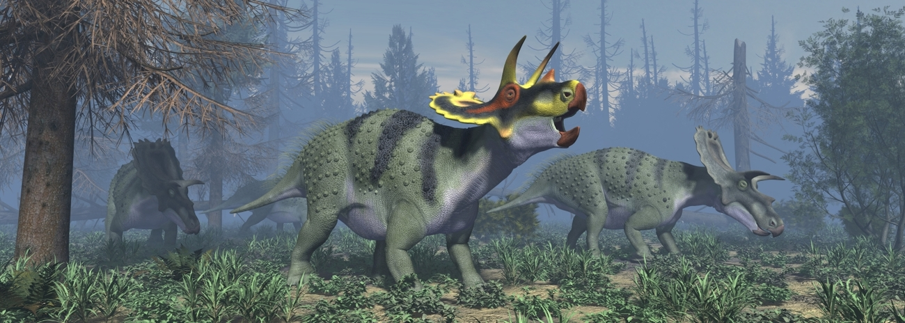 Anchiceratops ornatus by Dinoraul