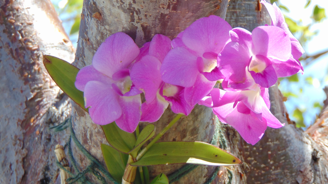 Purple Orchids by 3DFineries