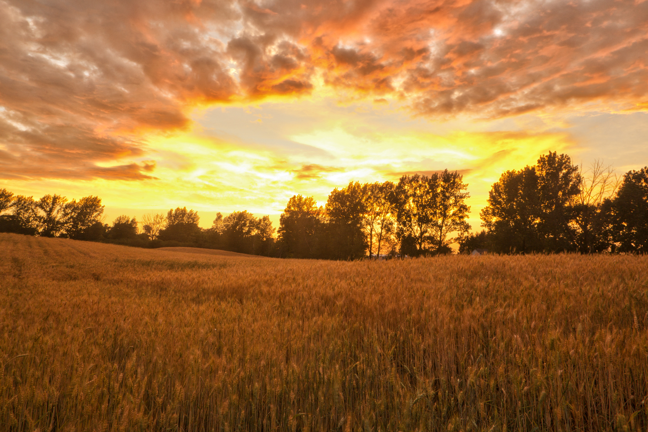 Sunset Over a Wheat Field by starfire777