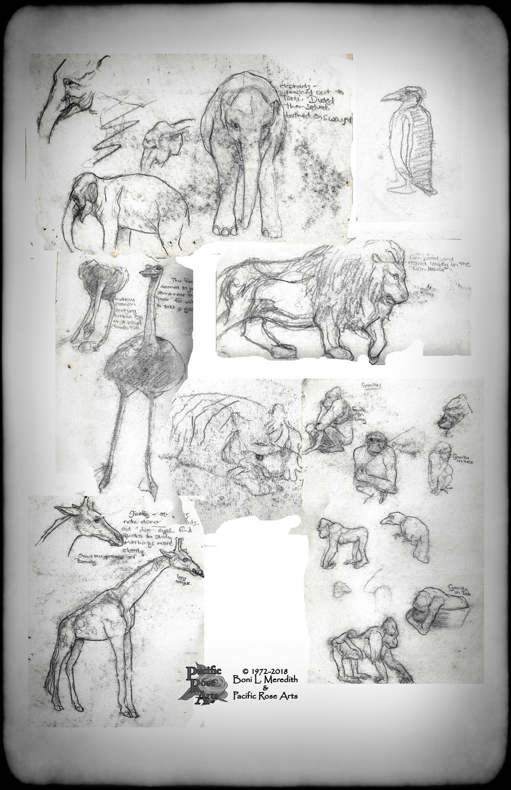 Sketches from SF Zoo by Boni