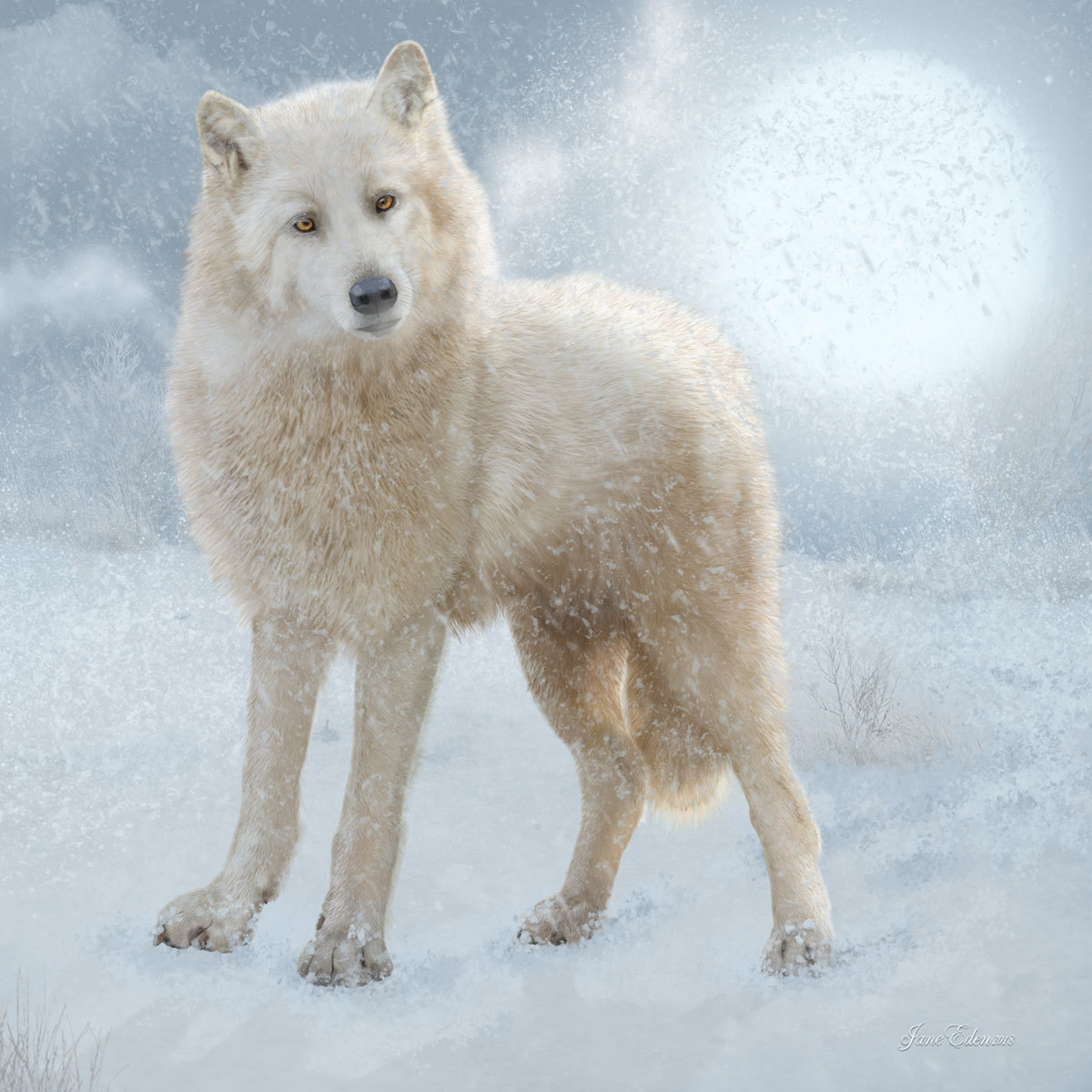 Lone Arctic Wolf - Happy Christmas to my friends! by JaneEden
