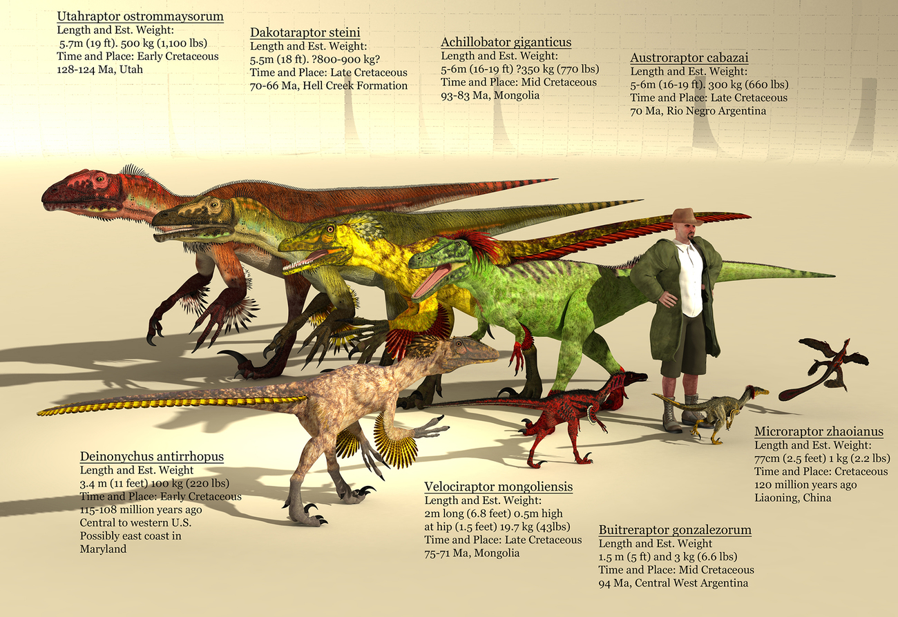 Dromaeosaurs (Raptors) Size Reference by adorety