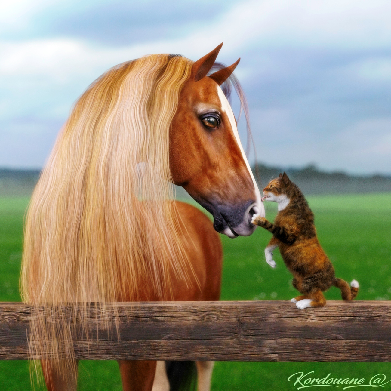 Friendship is not a question of species by Kordouane