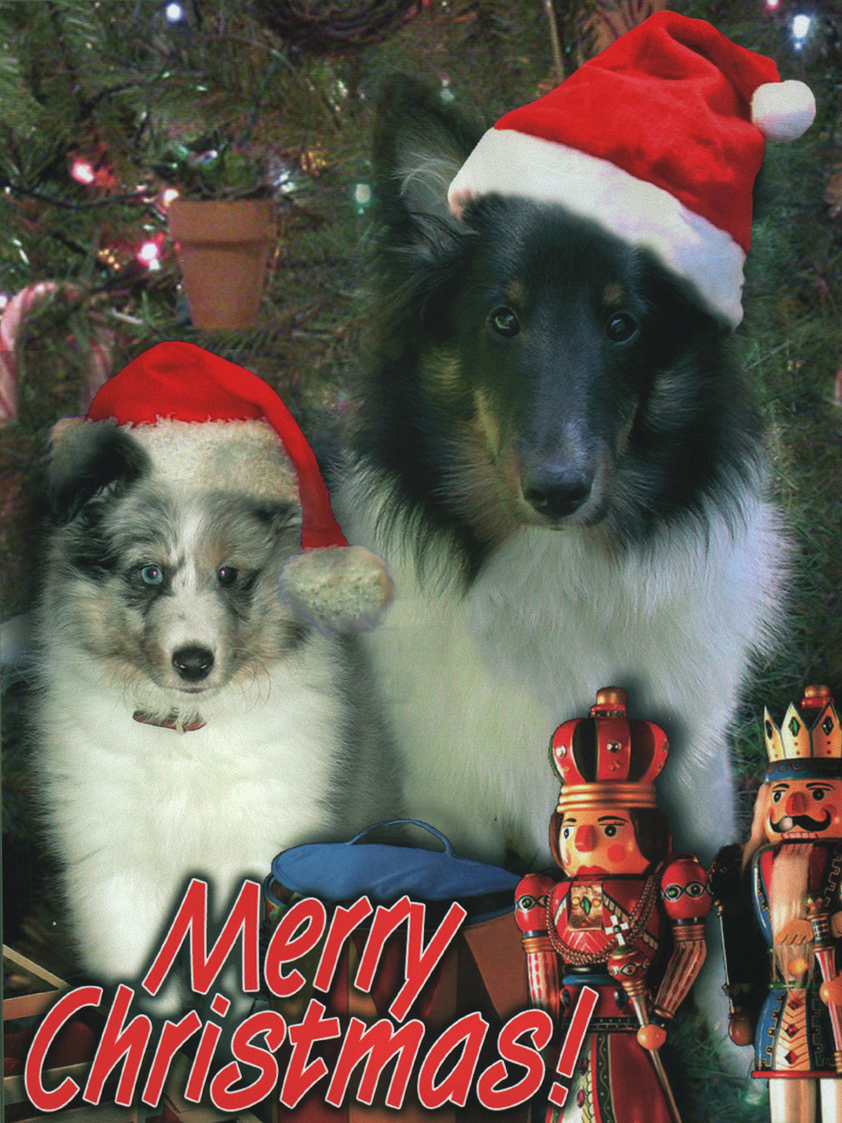 Merry Christmas to all! by Deecey