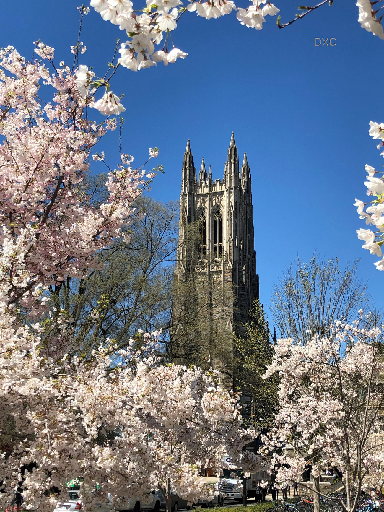 Duke Chapel In The Spring by DianeD
