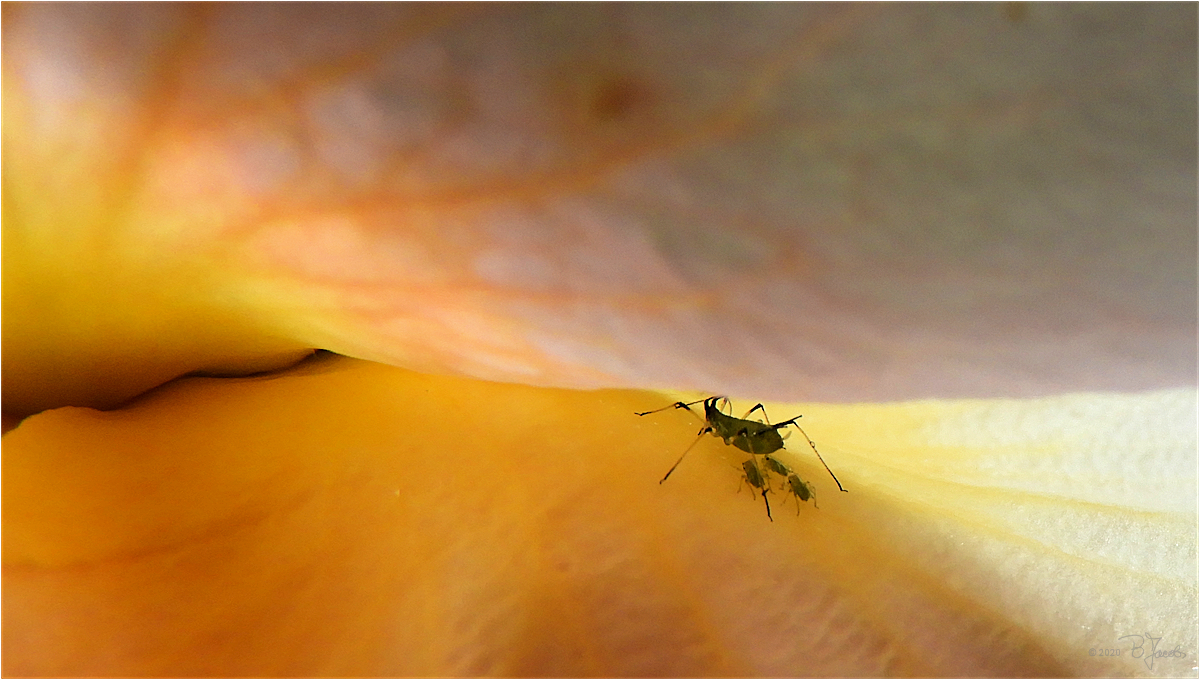 Madame Aphid and kids by mermaid