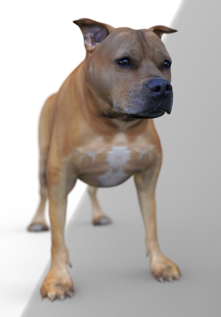 Ria 3d Staffy model wip2 by calum5